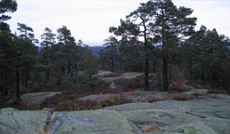 Hørsfjell - Bamble highest mountain